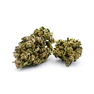 Lemon haze cannabis
